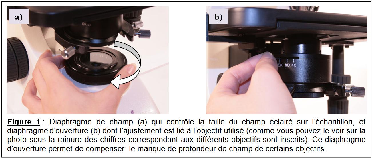 Comment regler microscope la r ponse est sur - Performance du bureau pour windows aero ...